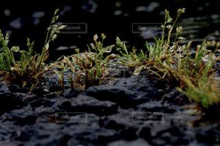 自然,雨,水面,景色,反射,雑草,梅雨,草木