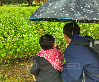 自然,花,雨,傘,緑,草,人物,人,兄弟,国営ひたち海浜公園,草木