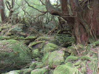 屋久島旅行の写真・画像素材[1203456]
