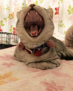 ベッドの上で横になっている猫の写真・画像素材[1258537]