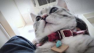 襟付きのシャツを着て猫の写真・画像素材[1275532]