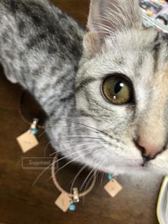 近くに猫のアップの写真・画像素材[1275533]