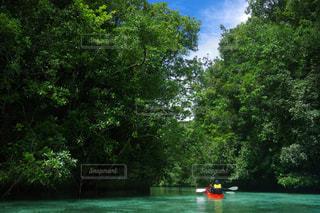 水の体の横にあるツリーの写真・画像素材[1202858]