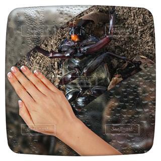 梅雨を吹き飛ばすように勢いよく脱皮をするカブトムシの写真・画像素材[1232078]