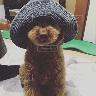帽子をかぶった犬の写真・画像素材[1202997]