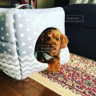ベッドの上に横たわる大きな茶色の犬の写真・画像素材[1203044]