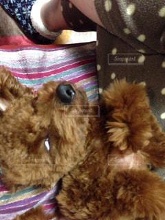 ベッドの上に横たわる犬の写真・画像素材[1203437]