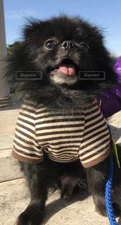 黒の t シャツを着ている犬の写真・画像素材[1203004]
