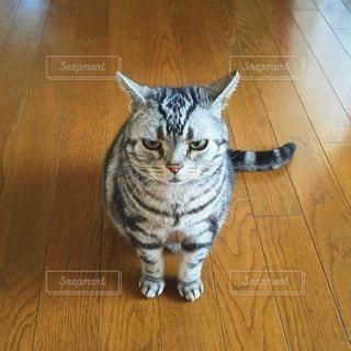 No.12997 猫