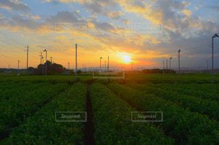 空,夕日,屋外,緑,夕暮れ,景色,明るい,茶畑,埼玉県,入間市,狭山茶