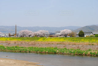風景,空,花,春,桜,屋外,ピンク,川,花見,山,草,外,河