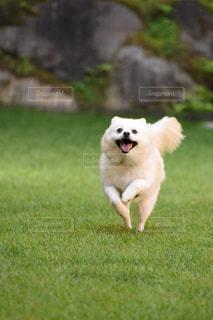 その口でフリスビーをキャッチする犬の写真・画像素材[1204705]