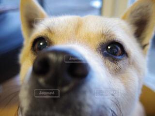 犬,動物,お部屋,部屋,室内,可愛い,明るい,目,頭,探す