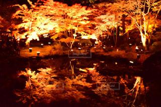 夜ライトアップされたツリーの写真・画像素材[1217241]