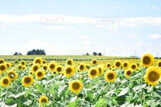 近くの花のアップの写真・画像素材[1217251]