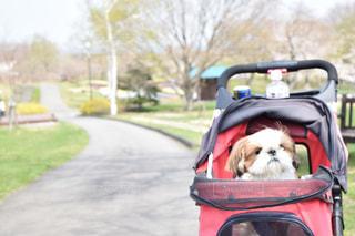 車の上に座っている犬の写真・画像素材[1221951]