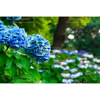 近くの花のアップの写真・画像素材[1371264]
