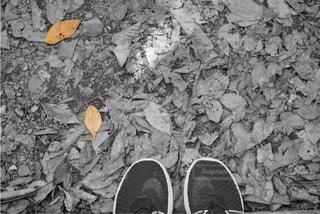 落ち葉の写真・画像素材[1615248]