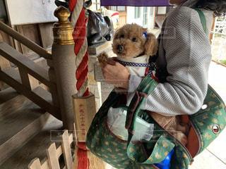 着ぐるみを着た犬の写真・画像素材[1765445]