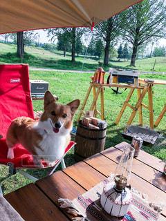 テーブルの上に座っている犬の写真・画像素材[1206673]