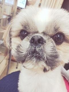 楽器屋の犬の写真・画像素材[2702983]