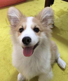 ウキウキしている犬の写真・画像素材[1211042]