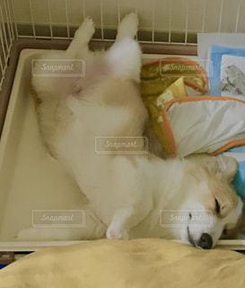 ぐっすり眠る犬の写真・画像素材[1211051]