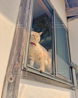 猫の写真・画像素材[45853]