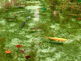 神秘的な池!の写真・画像素材[1208756]