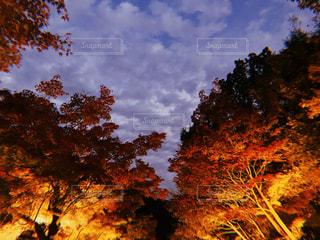 夜景の写真・画像素材[2737480]