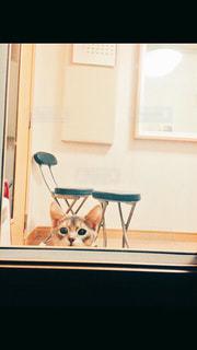 猫,部屋,室内,ねこ,のんびり,アビシニアン,くつろぎ