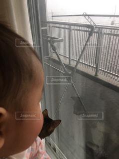 猫,雨,室内,ベランダ,赤ちゃん,梅雨,曇天