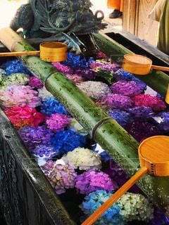 京都,紫陽花,柳谷観音