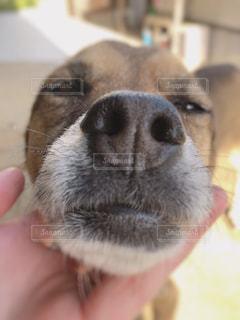 近くにカメラを見て犬のアップの写真・画像素材[1210682]