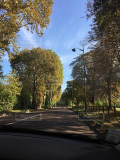 秋,屋外,樹木,フランス,晴れた空