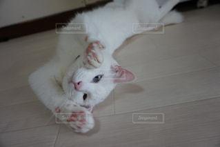 猫,お部屋,白,部屋,室内,ねこ,白猫,cat,のんびり,オッドアイ,伸び,ネコ,ごろん