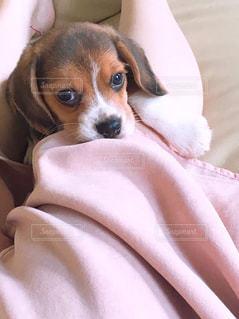 物欲しげな子犬の写真・画像素材[1210746]