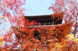 風景,秋,紅葉,京都,仏閣,秋空