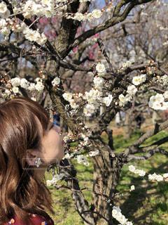 春の香りの写真・画像素材[1244224]