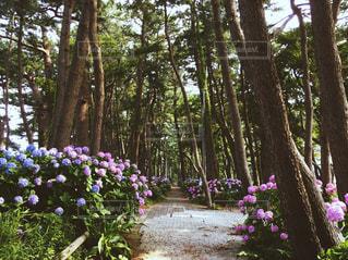 空,公園,花,雨,屋外,散歩,紫,景色,鮮やか,紫陽花,梅雨,ガーデン,フォトジェニック,インスタ映え