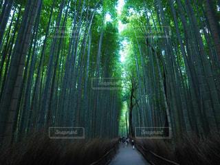竹林の細道の写真・画像素材[1211253]