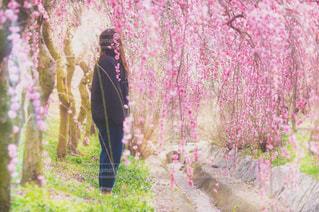 女性,20代,自然,花,春,屋外,梅,お花見,ピクニック,人物,三重県,ポートレート,新生児,ライフスタイル,梅林,いなべ市梅林公園