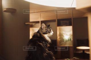 座っている猫の写真・画像素材[1260459]