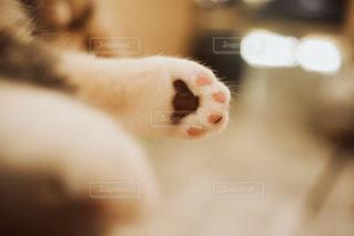 ぷにぷにの肉球の写真・画像素材[1260463]