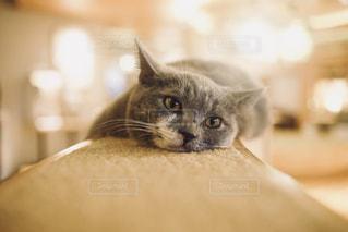 猫のアップの写真・画像素材[1260464]