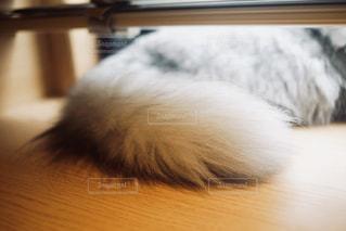 猫のしっぽの写真・画像素材[1260467]