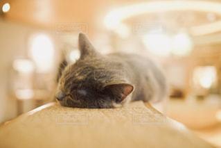 すねてる猫の写真・画像素材[1260468]