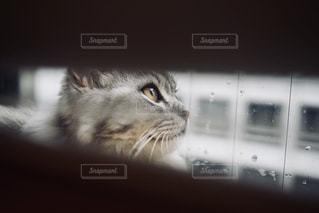猫の目線の写真・画像素材[1285369]