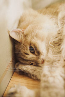 こちらを見ている猫の写真・画像素材[1290534]