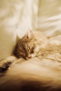 寝てる猫の写真・画像素材[1290535]